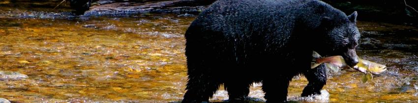 The Great Bear Rainforest agreement
