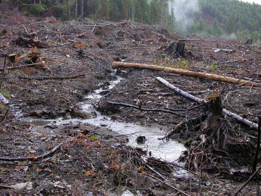 Forest certification program is logging industry Greenwash, says report