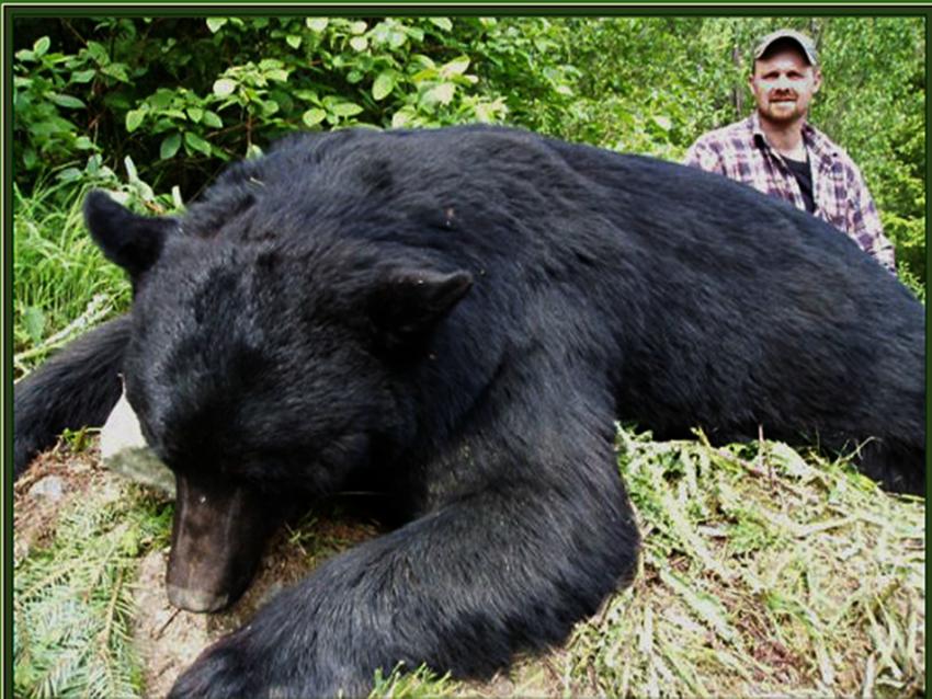 trophy hunters decimate bears in b c valley under. Black Bedroom Furniture Sets. Home Design Ideas
