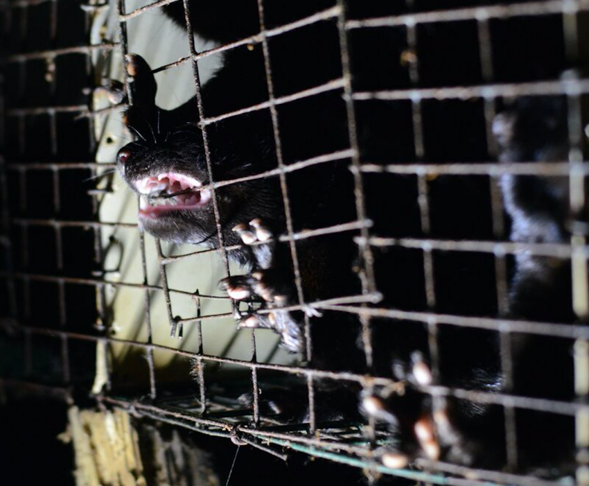 fur farm, mink, animal cruelty, B.C. fur farm, fur industry, fur trade