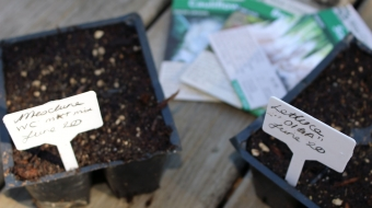 Starting our winter vegetable seeds.