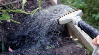 Sprinkler in an urban vegetable garden
