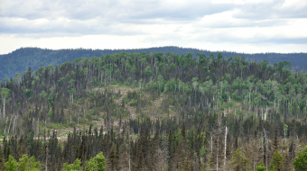 Photo of tree tree pest killing forests