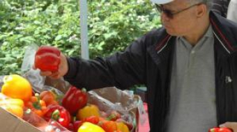 Man inspects bell peppers