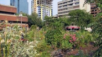 Davie Street community garden photo by Daryl Mitchell via Flickr creative common