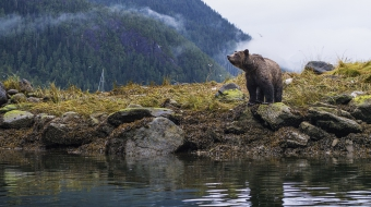 Photo of grizzly bear by Sophie Wright
