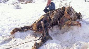Grizzly trophy hunt bear beheaded - Ian McAllister
