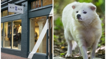 Kit and Ace, Gastown, cashmere, raccoon dog, fur industry, animal rights