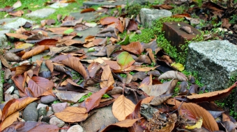 Why leaving your leaves is loving your leaves