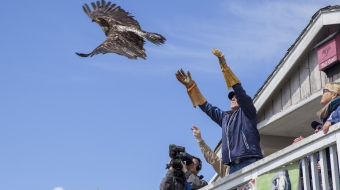 Bald eagle release O.W.L. Orphaned Wildlife Rehabilitation - Mychaylo Prystupa