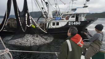 Heiltsuk herring RCMP fish commercial Vancouver Obverser  Ian McAllister