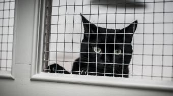 Cat awaits adoption at BCSPCA