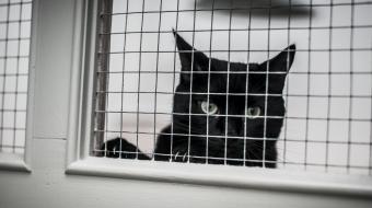 Cat awaits adoption at BCSPCA