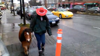 Horse in Vancouver. Photo by Joshua Hergesheimer