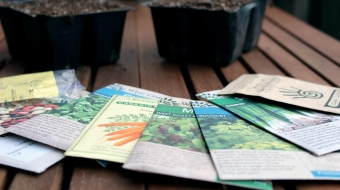 Seeds you can plant in September
