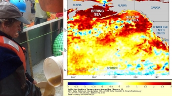 Sampling the algae bloom; unusually warm sea surface temperatures/NOAA