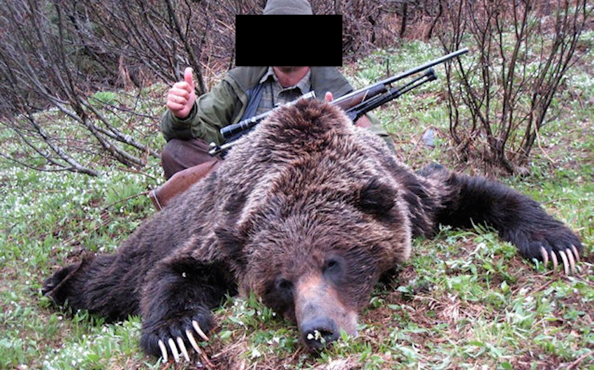 b c gov t approved grizzly hunt despite overwhelming
