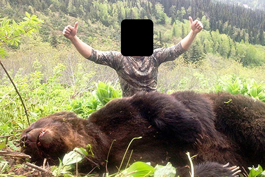 grizzly hunt, trophy hunting, Tsilhqot'in, Christy Clark