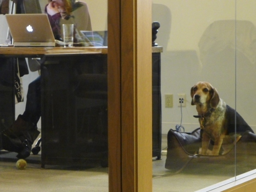 HootSuite office tour: dog and laptop