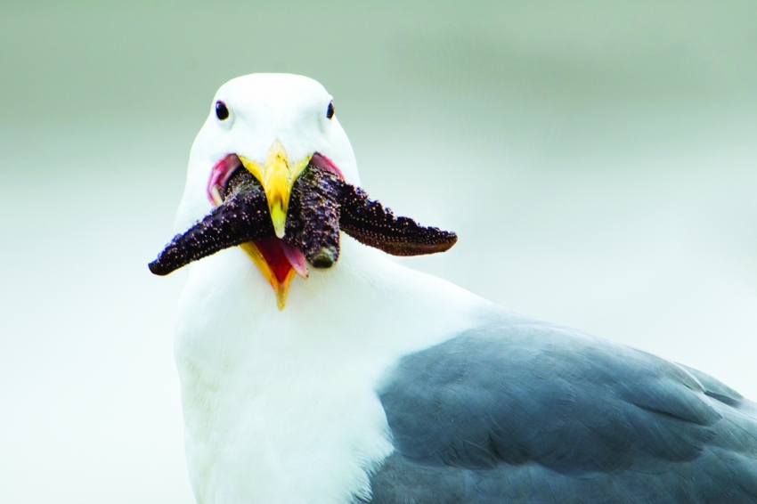 Seagull, photographed by Paul Colangelo